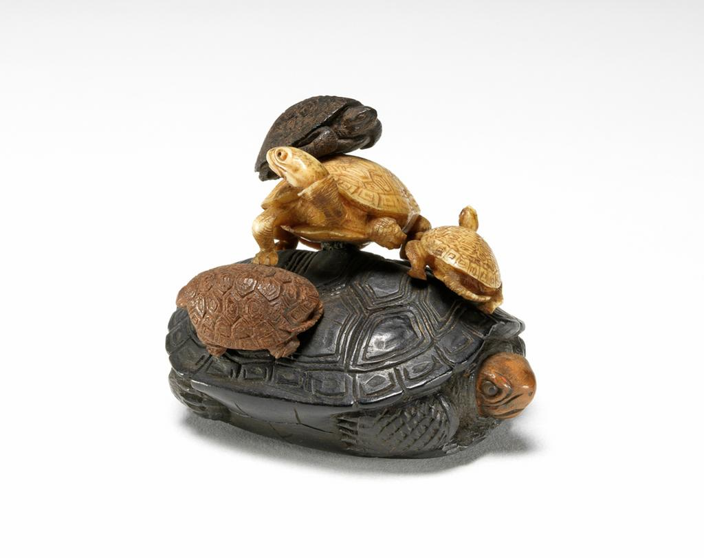 Featured image for the project: A group fo tortoises climbing over each other
